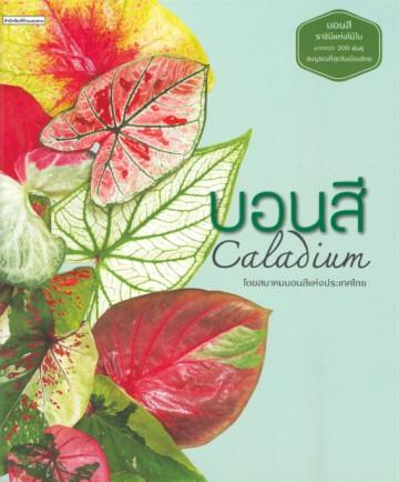 บอนสี Caladium